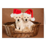 Two Yellow Lab Christmas Puppies Greeting Card