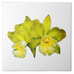 Two Yellow Orchids Ceramic Tiles