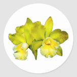 Two Yellow Orchids Sticker