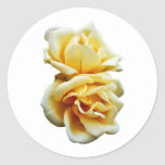 Two Yellow Roses Round Stickers