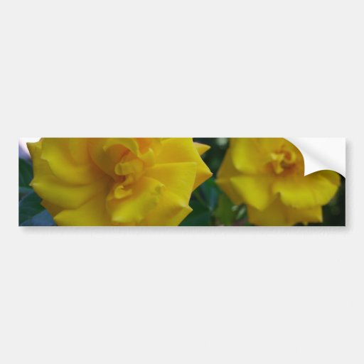 Two Yellow Roses with Leaves - flower photography Bumper Stickers
