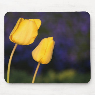 Two Yellow Tuilps Mouse Pad