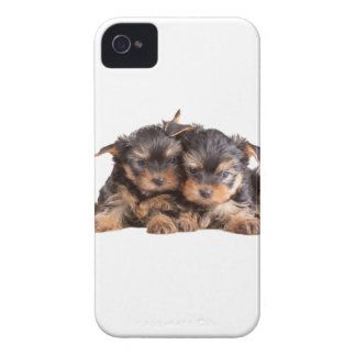 Two Yorkie Puppies iPhone 4 Case