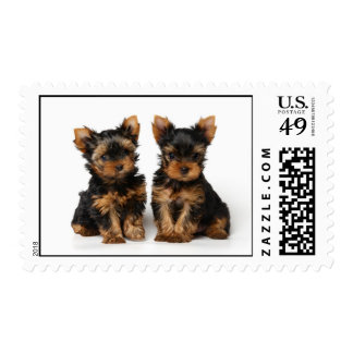 Two yorkie puppies stamp