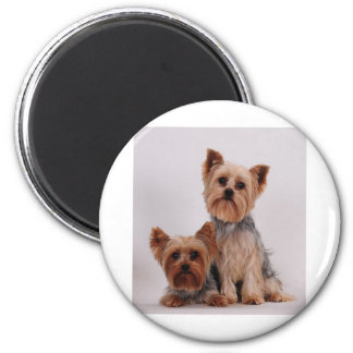 Two Yorkies 2 Inch Round Magnet