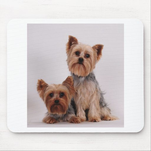 Two Yorkies Mouse Pad