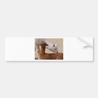 Two young alpacas bumper sticker