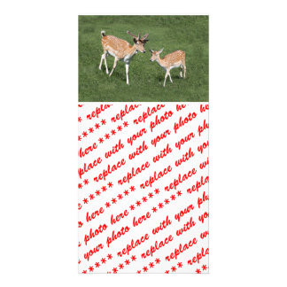 Two Young Deer Picture Card
