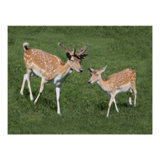 Two Young Deer Posters