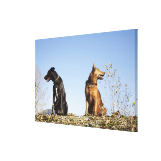 Two young dogs looking in opposite directions. canvas print