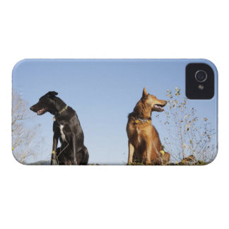 Two young dogs looking in opposite directions. iPhone 4 Case-Mate case