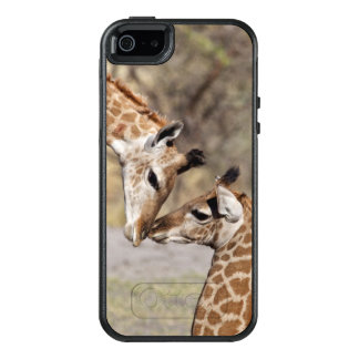 Two Young Giraffes OtterBox iPhone 5/5s/SE Case