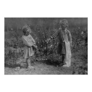 Two Young Girls Picking Cotton Photograph Poster