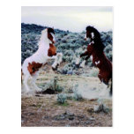 Two Young Horses Playing Postcard