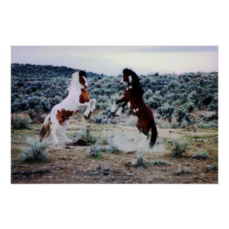 Two Young Horses Playing Poster