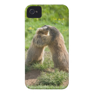 two young marmots Case-Mate iPhone 4 case