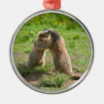 two young marmots ornament