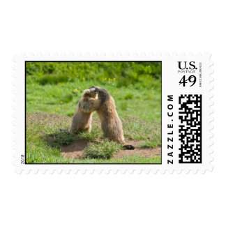 two young marmots postage