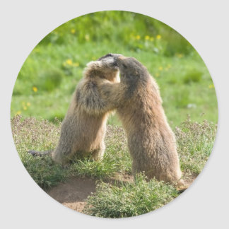 two young marmots round stickers