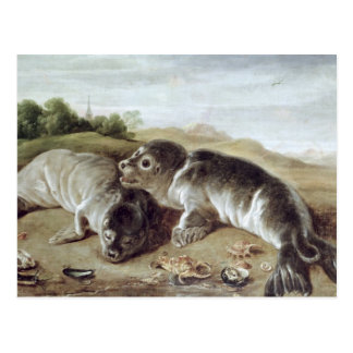 Two Young Seals on the Shore, c.1650 Postcard