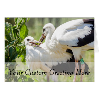 Two Young Storks, Birds Animal Photography Card