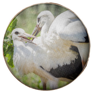 Two Young Storks, Birds Animal Photography Chocolate Covered Oreo
