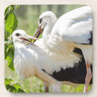 Two Young Storks, Birds Animal Photography Drink Coaster