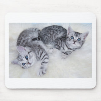 Two young tabby cats lying lazy together on fur mouse pad