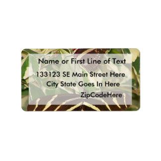 Two zebra butterflies on foliage address label