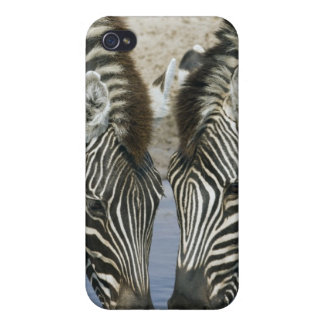 Two Zebras (Equus quagga) drinking water, iPhone 4/4S Covers