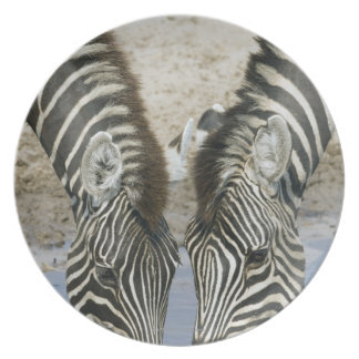 Two Zebras (Equus quagga) drinking water, Melamine Plate