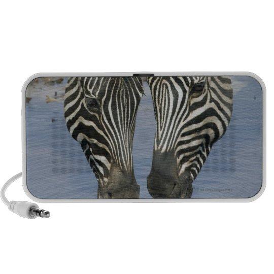 Two Zebras (Equus quagga) drinking water, Portable Speaker