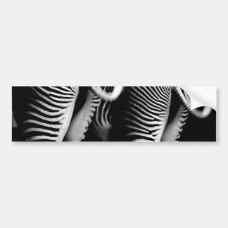Two Zebras in Close Up View From Behind Bumper Sticker