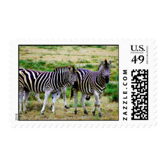 Two Zebras Postage