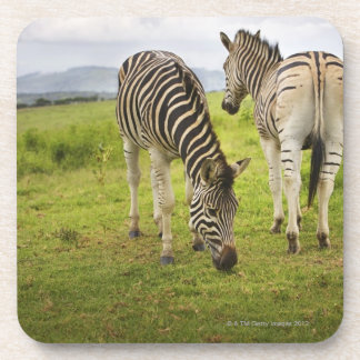 Two zebras, South Africa Coaster