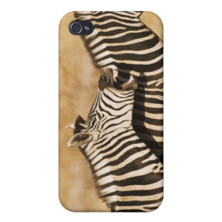 Two zebras standing in grass iPhone 4 cases
