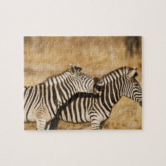 Two zebras standing in grass jigsaw puzzle