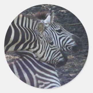 Two Zebras Sticker