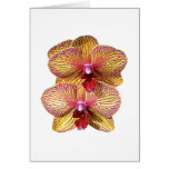 TwoYellow and Magenta Orchids Greeting Cards