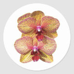 TwoYellow and Magenta Orchids Round Sticker