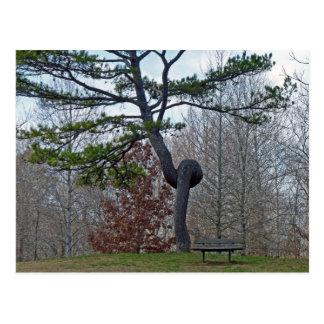 Twsited Tree Postcard