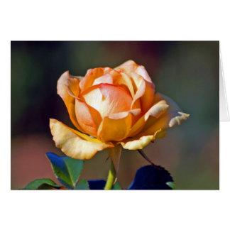 Tyler Rose Garden - Yellow/Orange Hybrid Card