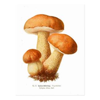 Tylopilus Post Card