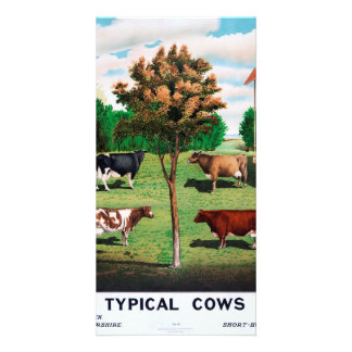 Typical Cows Card