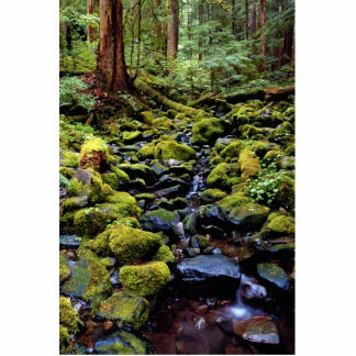 Typical rain forest scene near Sol Duc Hot Springs Standing Photo Sculpture