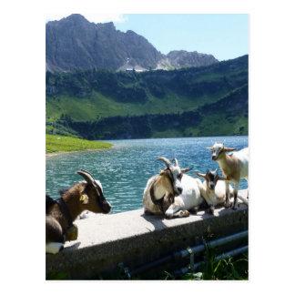 tyrol-538 tarjetas postales