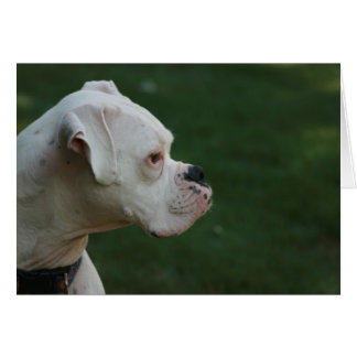 """Tyson"" White Boxer Dog Photo Greeting Card"