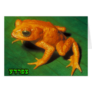 "Tzefardea In Hebrew Meaning ""Frog"" Card"
