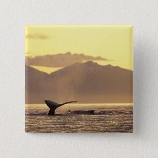U.S.A., Alaska, Inside Passage Humpback whale at Button