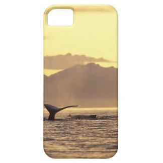 U.S.A., Alaska, Inside Passage Humpback whale at iPhone SE/5/5s Case